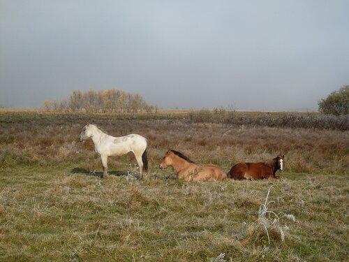 Лошадки осенью
