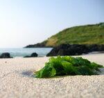 Трава морская