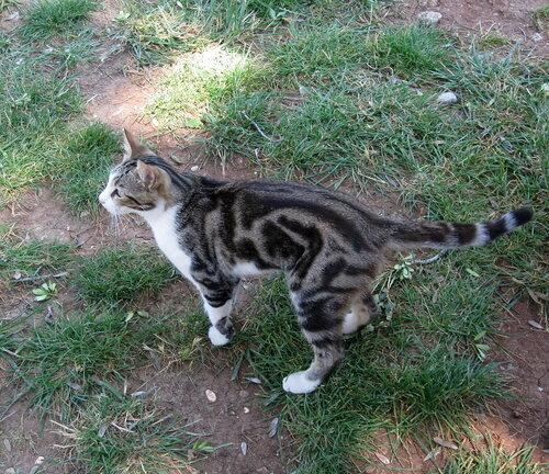 valentinka2363 — «Турецкий кот» на Яндекс.Фотках