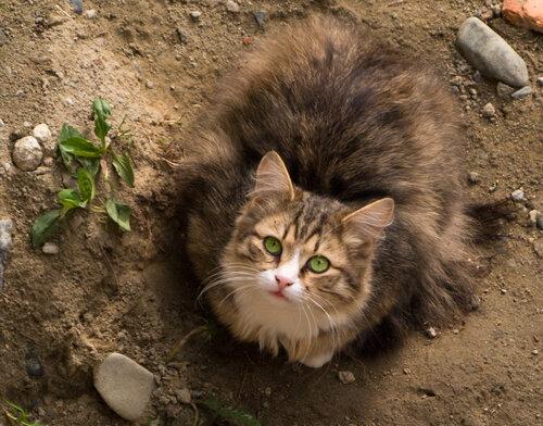 wega51 — «кот-5 15.06.09.jpg» на Яндекс.Фотках