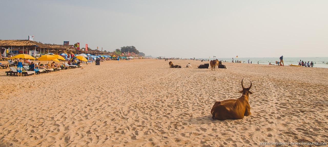 Пляжи Гоа, Калангут