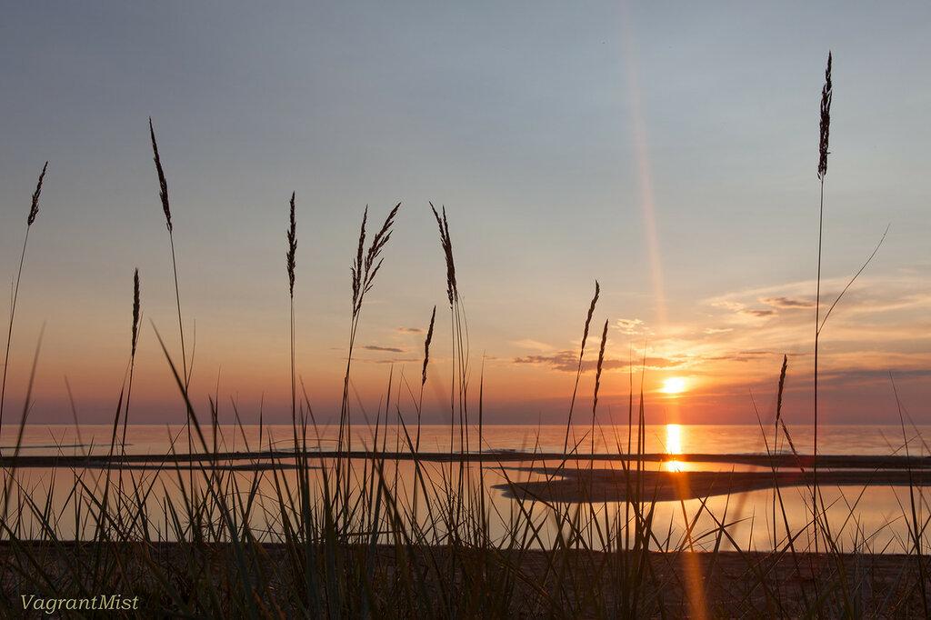 Высокая трава на берегу озера на фоне закатного солнца