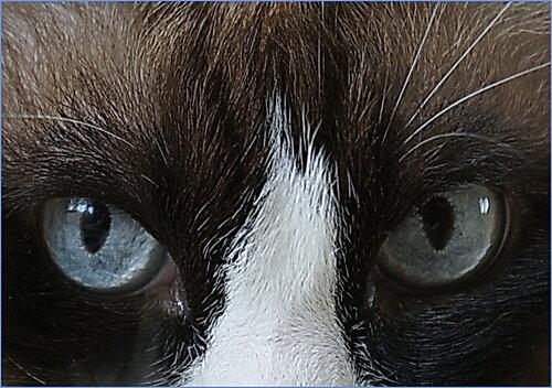 le-le20 — «Кошачий гипноз» на Яндекс.Фотках