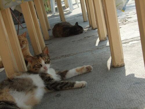 Madjara — «Ленивые монастырские коты» на Яндекс.Фотках
