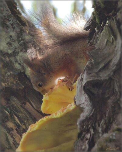 olancer — «Вкусный древесный гриб» на Яндекс.Фотках