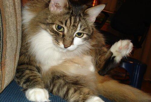 dasha-strizhik — «мой любимый котик » на Яндекс.Фотках