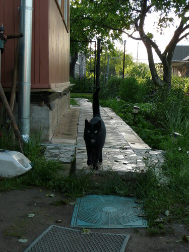 Татьяна — «Мы чёрные коты-мы обществу нужны для красоты» на Яндекс.Фотках