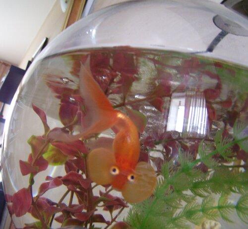 Рыбка Маруся*