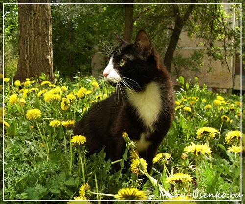 Кошка Ляся. Сайт /