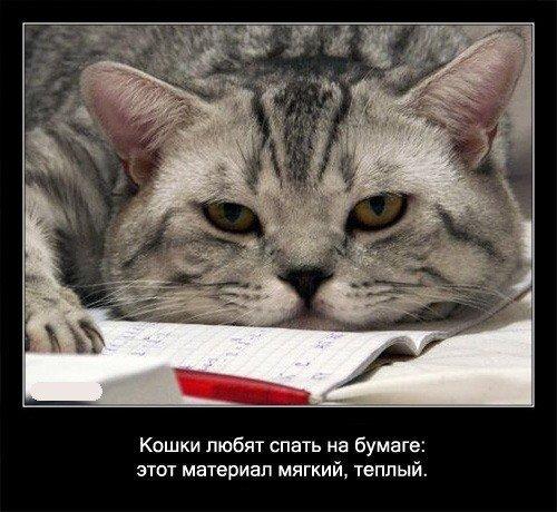 Прикольные смешные картинки с котами и надписями 13