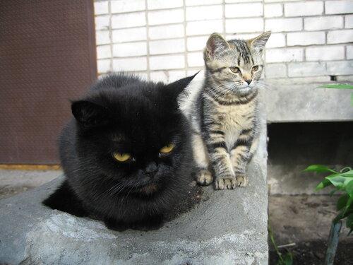 vya8948 — «коты» на Яндекс.Фотках