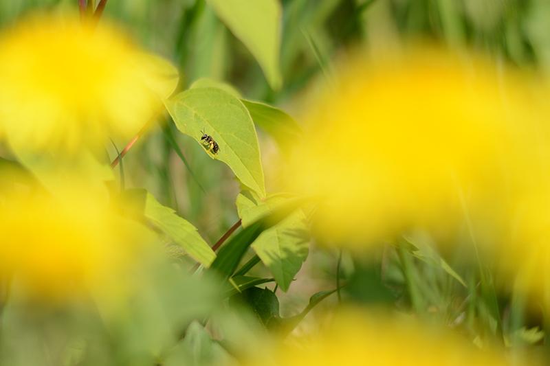 весеннее пчела