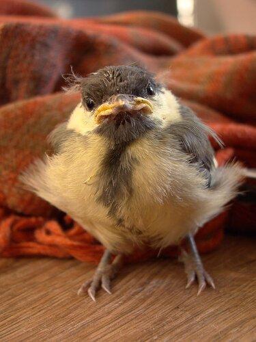 Важная птица