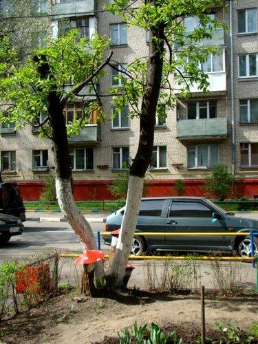 Serp-jivya4ka — «грибы под черемухой» на Яндекс.Фотках