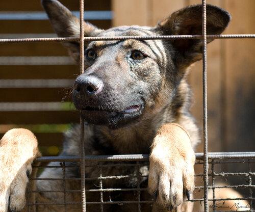 Собаки из приюта ГАВ