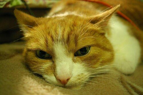 SPbArt — «кота» на Яндекс.Фотках