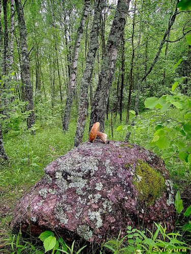 svi-yura — «Лес зовёт.» на Яндекс.Фотках