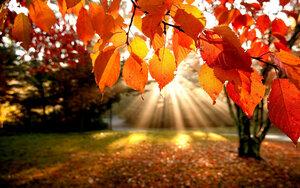 По астрономическому календарю – сегодня первый день осени