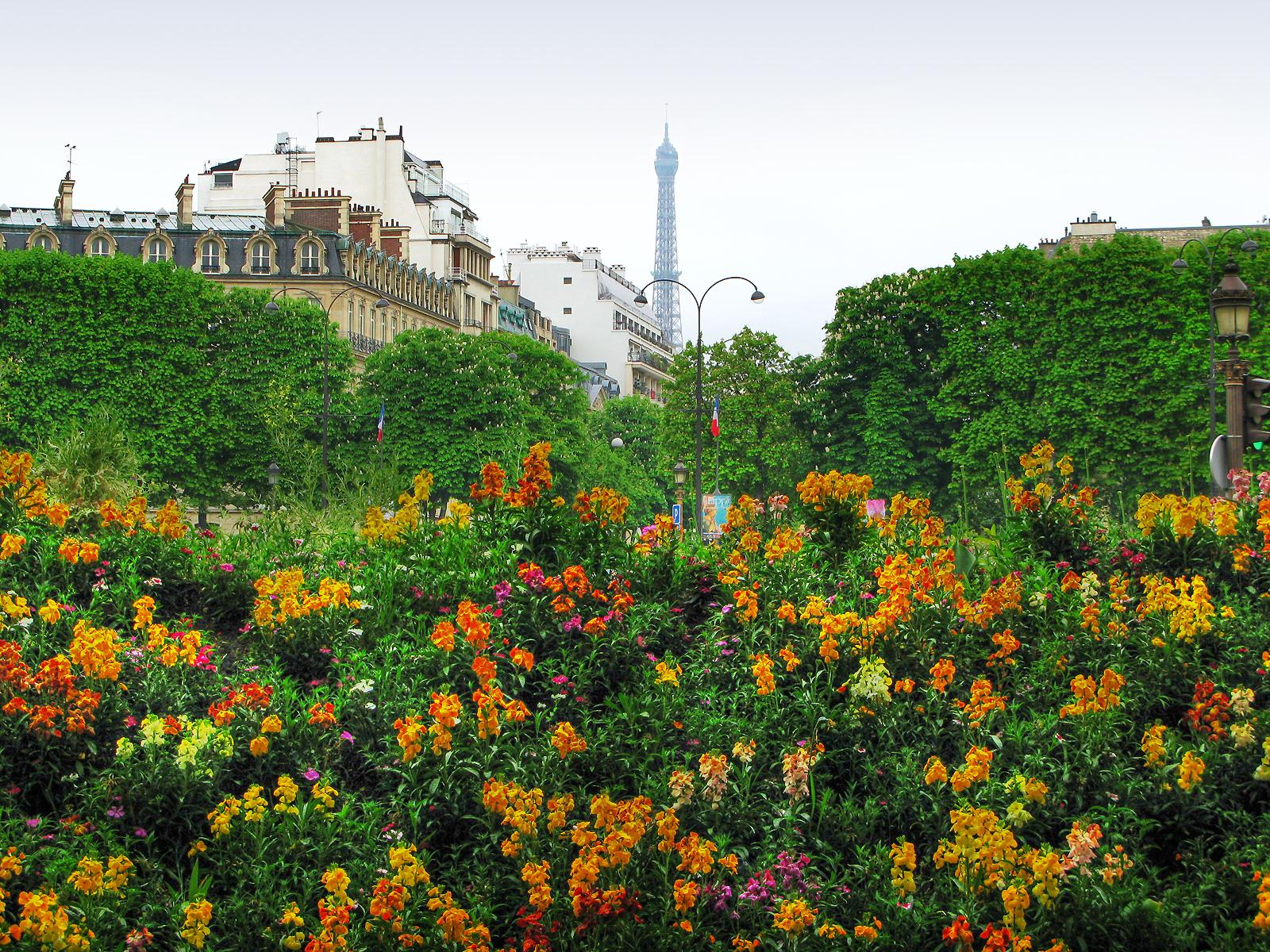 Париж в цвету