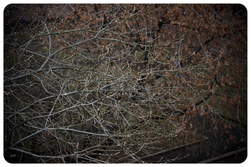 06 декабря 2008 на воробьевых горах