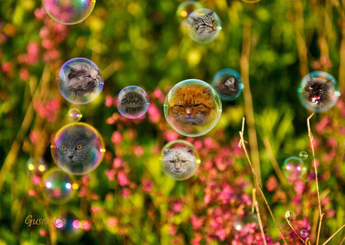 homo-bobr — «Жаль, что сегодня не кошки.jpg» на Яндекс.Фотках