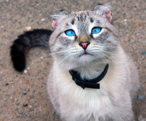 Zhanna — «Голубоглазый кот» на Яндекс.Фотках