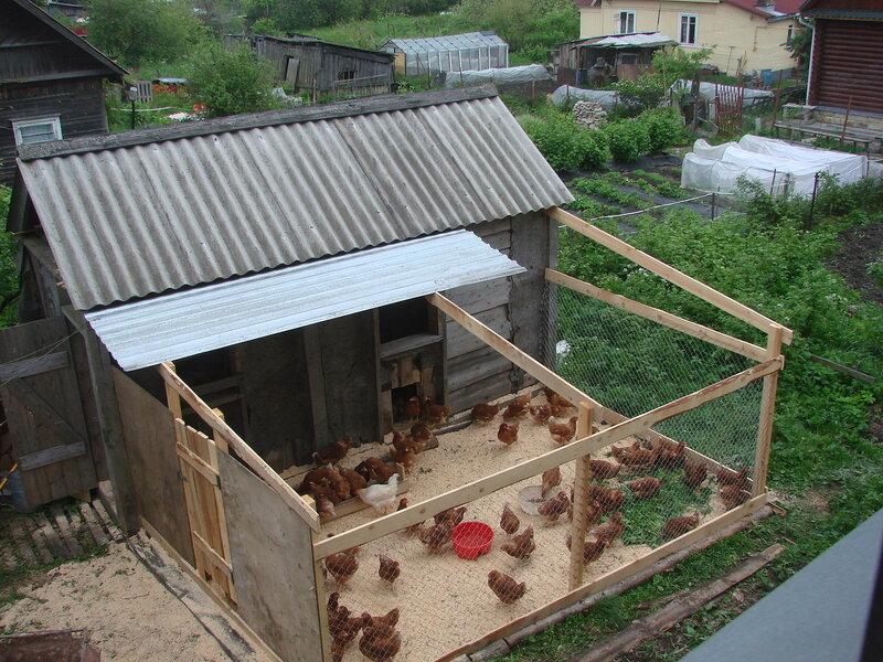 Мини ферма или куры несушки на даче