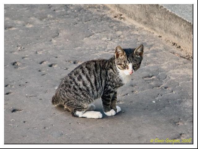 Маленький житель Елгавы
