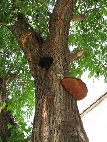 ninka1987 — «Грибы на деревьях тоже бывают разные...» на Яндекс.Фотках