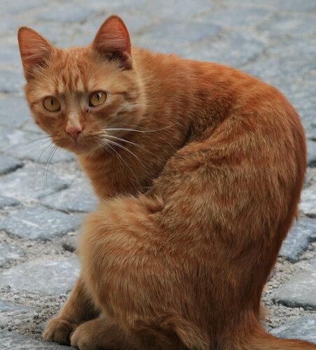 okhramov — «Самый чешский кот... Самый чешский взгляд...» на Яндекс.Фотках