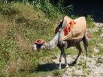 турецкий верблюд