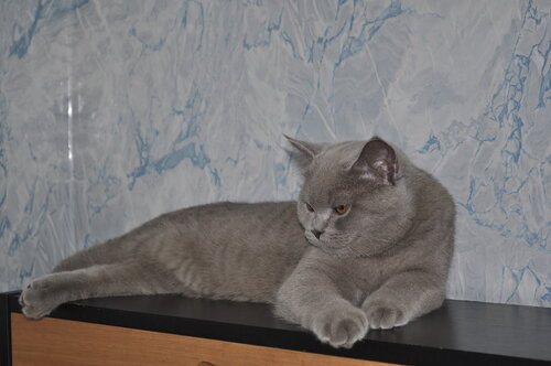 trefilova-ekaterina — «_DSC0915.JPG» на Яндекс.Фотках