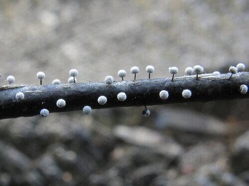 tvs-svet — «Physarum sp.» на Яндекс.Фотках