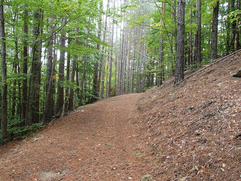 дорога на Плачковци по сосновому лесу