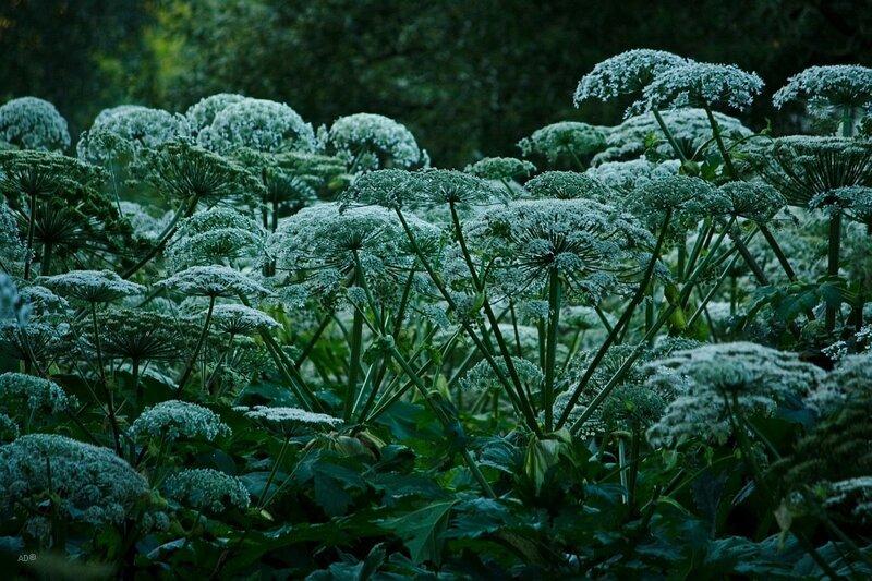 Прогулка в Ботаническом саду - 2009-07-11