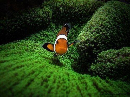 Рыбка