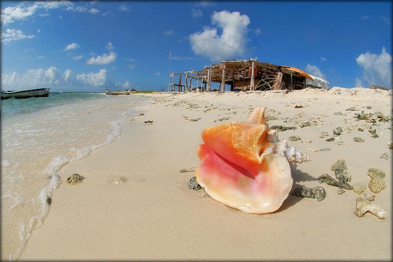 Находить ракушки на берегу моря толкование снов