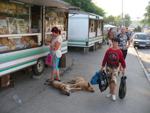 собаки спят полуобнявшись у метро Осокорки в Киеве
