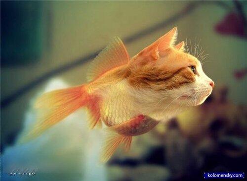 РыбаКот**