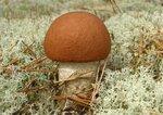 идеальный гриб