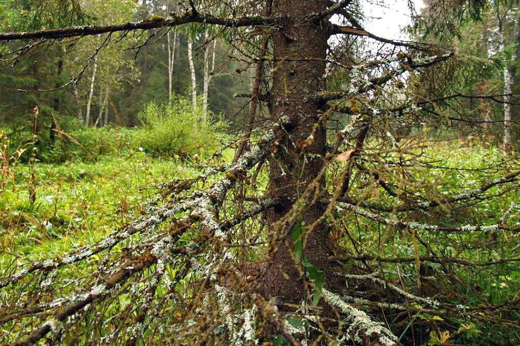 ВЧелябинской области искали одного грибника, спасли четверых