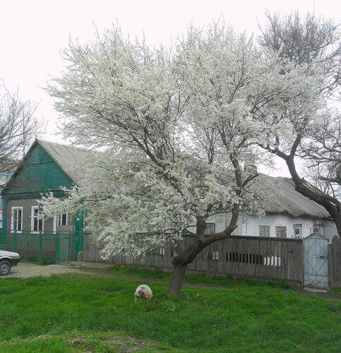 На улице весенней ... SAM_6116.JPG