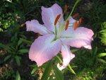 Цветы которые сильно пахнут