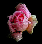 Цветы и ...