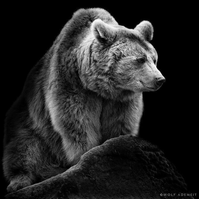 Wolf Ademeit