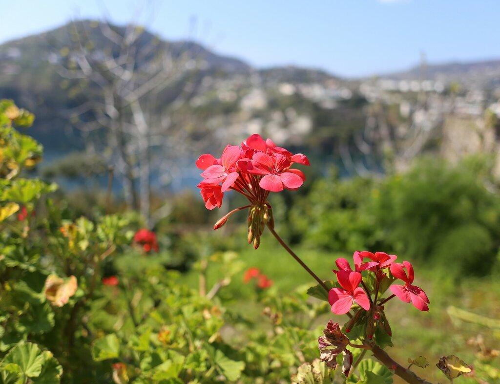 Ischia, the Aragonese castle.