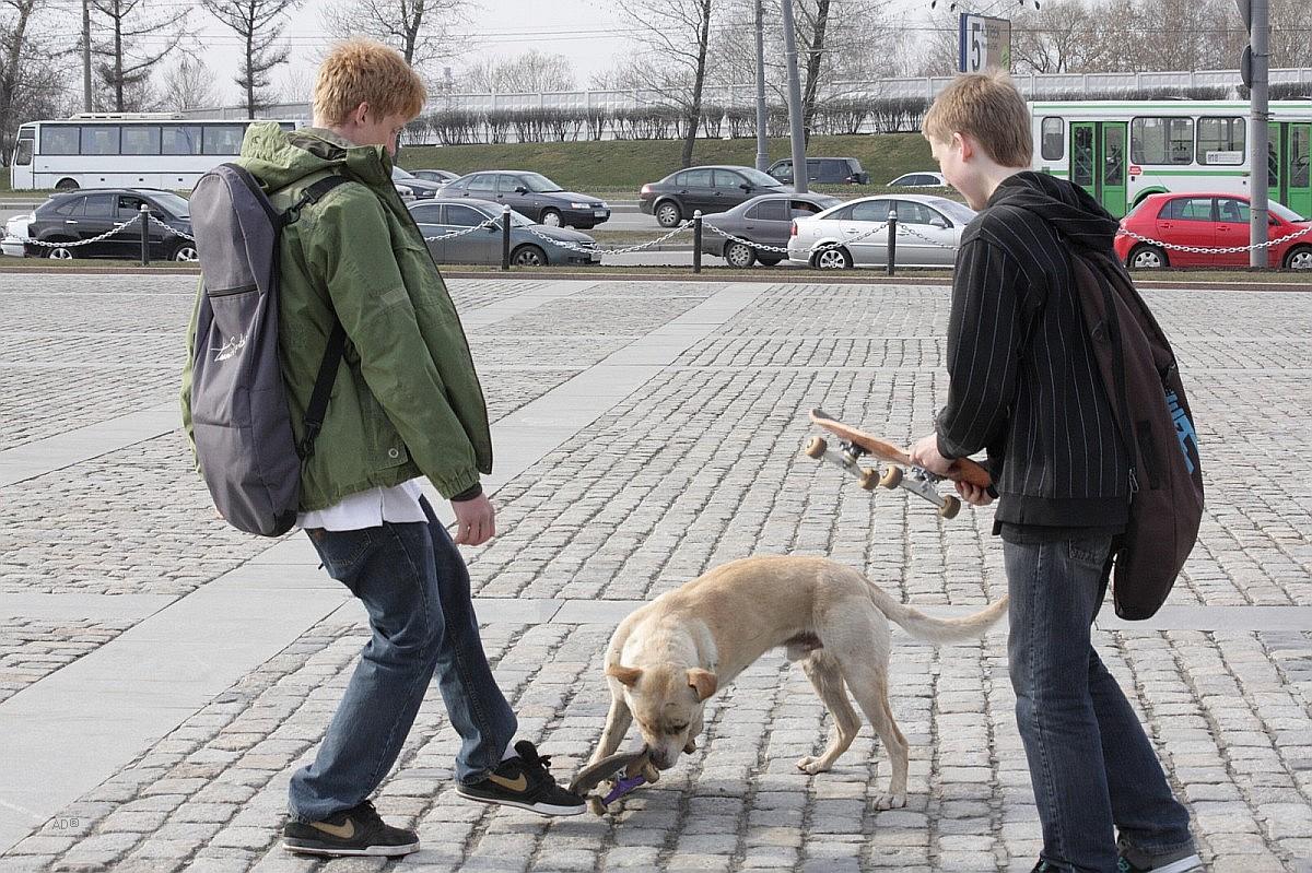пес-скейтер