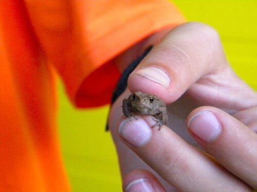 Лягушонок в левой руке