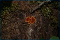 http://img-fotki.yandex.ru/get/3511/15842935.14c/0_d0ee4_629f3d16_orig.jpg