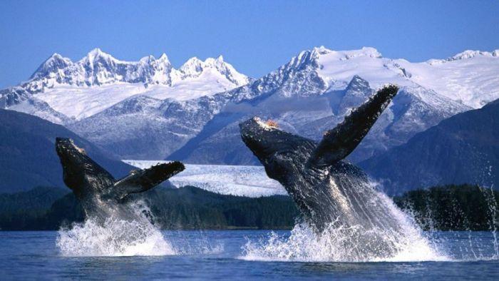 история спасения китов